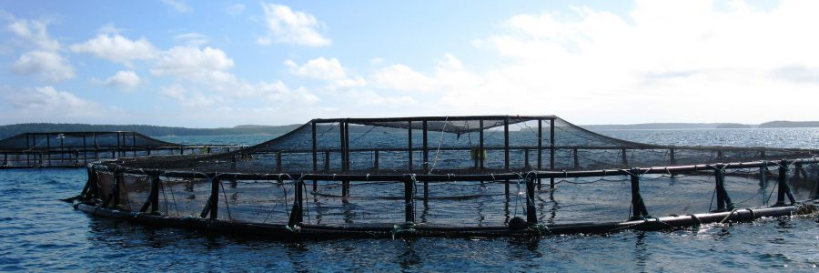 FEAMP : Appel à Projets Innovation en aquaculture 2020